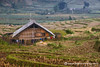 House on the Paddy Fields (fesign) Tags: houses sunlight plant nature field horizontal landscape outdoors photography day village rice tranquility vietnam agriculture ricefield scenics sapa riceterraces paddyfield laundryday airdry extremeterrain colourimage cultivatedland elevatedview terracedfields dryinglaundry hoanglienson laocaiprovince ricecrops hoangliennaturereserve blackhmonghilltribe linedryinglaundry