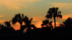 Winter sunset (Jim Mullhaupt) Tags: pink blue sunset red wallpaper orange sun color tree green weather silhouette yellow landscape evening nikon flickr sundown florida dusk palm tropical coolpix bradenton p510 mullhaupt cloudsstormssunsetssunrises jimmullhaupt
