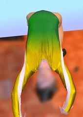 Pi cvien 4 (mermanpetleotard) Tags: spandex lycra leotard maillot dres trikot gymnastikanzug leotardo justaucorps gymnastikanzge gymnastick