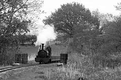 BLR 38033bw (kgvuk) Tags: trains locomotive railways steamtrain steamlocomotive winifred narrowgaugerailways blr llangower balalakerailway rheilfforddllyntegid 040st quarryhunslet