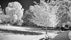 Walk in the park (Yasmine Hens) Tags: europa flickr belgium ngc infrared namur hens yasmine wallonie 720nm infrarouge kolari iamflickr flickrunitedaward hensyasmine