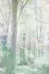 Infrared trees (alanrharris53) Tags: wood woodland ir leicestershire treetops infrared canopy loughborough outwoods