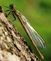 (bilska.anna) Tags: uk nature flickr wildlife uknature flickrnature