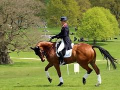 Chatsworth horse trials 2016 (Elizabeth Story) Tags: horse grass animal sport three day outdoor riding equestrian tress chatsworth 2016 eventing zaraphillips chatsworthhorsetrials dressagewarmingup