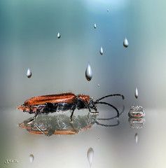 Drip...drip...drip...drip... (kunstschieter) Tags: thecure rainallday dripdripdripdrip vuurboktor