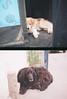 002 (Dliok) Tags: dog film 35mm olympus olympuspen