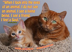 I see a friend, I feel a soul. (youtube.com/utahactor) Tags: pink red orange pet cute green animal yellow cat fur nose mackerel ginger eyes friend kitten feline tabby famous adorable fluffy whiskers phoebe website soul stare rare videos striped furbaby tomcat viral youtube kittycuddles friendsofzeusandphoebe bestmeow gingerkittiesfour