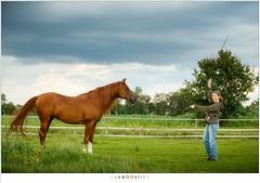 Fotograferen van Eureko (nandOOnline) Tags: weide dier manege equus paard paarden nicol equidae arabier eureko hoefdier onevenhoevigen