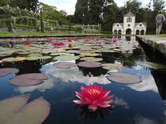 Lilypond at Bodnant Garden. (Flyingpast) Tags: wb2000 tl350 lilypond garden bodnant wales flower pond summer uk colour nationaltrust pretty petals water clouds reflection plant pad holiday vacation travel tourism nature northwales conwynbay