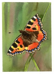 "Art Class - Butterfly W-colour wildlife project • <a style=""font-size:0.8em;"" href=""http://www.flickr.com/photos/64357681@N04/29604070774/"" target=""_blank"">View on Flickr</a>"