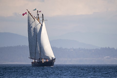 The Pacific Grace (Jeff Dyck) Tags: pacificgrace ship sails sailboat schooner sailing