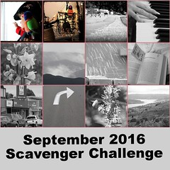 Y7 Day 271, September 2016 collage (Weld with Rob) Tags: fdsflickrtoys sc916 bwphotos pirateparrot internationaltalklikeapirateday bighugelabs