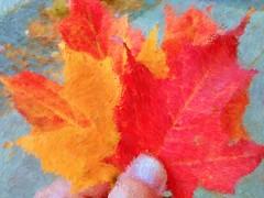 Fall Foliage (brooksbos) Tags: autumn brooksbos brooks color colour colours colorful fall massachusetts newengland nature motorola motog