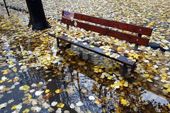 Wet bench () Tags: autumn fall wet water leaves yellow foglie reflections bench puddle photography photo newspaper foto photographer photos sony fotografia acqua autunno riflessi stefano fotografo panchina trucco pozzanghera giornale gialle bagnata rx100 zush stefanotrucco