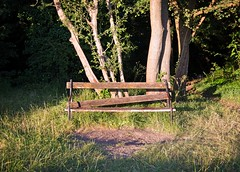 park bench (NekoKisshuLover) Tags: sunset summer green bench warm bright