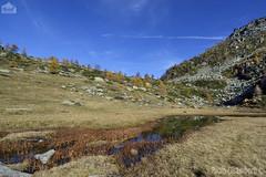 Torbiera- peat-bog (paolo.gislimberti) Tags: autumn autunno mountainlandscape autumnalcolors ceresolereale coloriautunnali paesaggiodimontagna alpineenvironment alpinegrassland lagodres ambientiumidi prateriaalpina ambientealpino dampenvironments dreslake