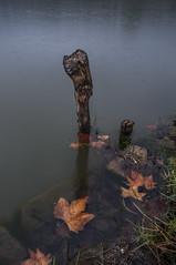 Cold Autumn Rain (Picocoon) Tags: china autumn lake rain leaf day gloomy stack withered hefei ilobsterit