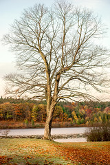 Post- (Chancy Rendezvous) Tags: foliage tree bare november cold autumn morning davelawler blurgasm blurgasmcom davidclawler chancyrendezvous