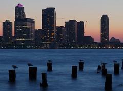 Old and New (beanhead4529) Tags: nyc newyorkcity sunset seagulls jerseycity manhattan hudsonriverpark hudsonriver microfourthirds olympusem5 olympus75mm
