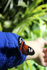 Butterfly and me (Mandy Canhestro) Tags: usa nature butterfly insects borboletas insetos tropicais