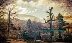 Something weird at the back of the garden (Bobokeh) Tags: texture garden paysage memoriesbook photomorphis