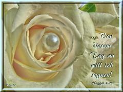 Von diesem Tag an / From this day on (Martin Volpert) Tags: flower fleur christ god jesus flor pflanze bible blomma christianity blume bibbia fiore blte blomst bibel virg christus lore biblia bloem gott blm iek floro kwiat flos weddingcard ciuri bijbel schpfung kvet kukka cvijet flouer glauben christentum blth evangelium cvet zieds is floare blome iedas hochzeitskarte bibelverskarte hochzeitsgesteck mavo43