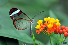 butterfly (barragan1941) Tags: flowers flores insectos butterfly costarica mariposas