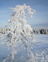 frozen (kadege59) Tags: schnee winter snow ice germany deutschland thringen thuringia eis thringerwald suhl schneekopf