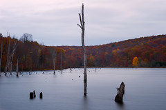 Blue Isolation (SunnyDazzled) Tags: park longexposure autumn lake cold reflection water landscape evening newjersey scenery state bare reservoir hills late deadtrees longpondironworks