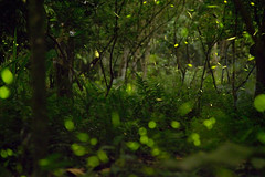 Fireflies - The underground galaxy (Sam Loranson) Tags: wood longexposure trees summer black green nature grass night forest canon dark season insect underground landscape lowlight exposure quiet bokeh taiwan peaceful double galaxy creature lapse highiso fireflies lowangle gopro happness oldlens bshutter hero4 5d3 5dmarkiii