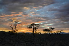 Lovely Sunrise in NamibRand Nature Reserve (zenseas) Tags: africa morning camping camp vacation holiday colour beautiful clouds sunrise fun dawn early desert colourful lovely namibia campsite startoftheday beforedawn namibrand namibrandnaturereserve namibrandfamilyhideout