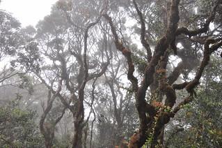cameron highlands- malaisie 21