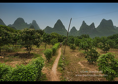 Orange groves along the famous Li River hike near Xingping,  Guangxi Autonomous Region, China (jitenshaman) Tags: china travel orange mountains nature fruit rural river garden landscape asian liriver li scenery asia grove hiking path guilin yangshuo chinese orchard hike walkway crop limestone destination oranges peaks agriculture karst guangxi xingping worldlocations