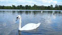 P5162048 () Tags: park england london hyde