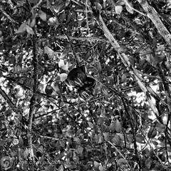 DSC05183 (O KDUKO) Tags: nature natureza animais sonyilce3000