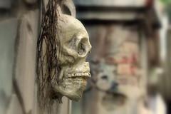 Skull 01 (Ashraf Siddiqui 76) Tags: skull spooky