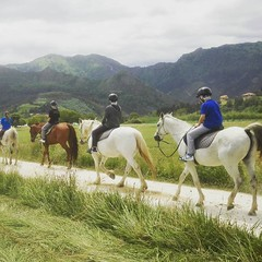#cuadraelalisal #rutasasturias #rutasacaballo #horses #turism #turismo #asturias