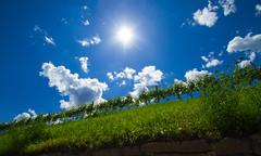 (c) Wolfgang Pfleger-6946 (wolfgangp_vienna) Tags: italien blue sky italy green del vineyard strada himmel vine vineyards grn vino sdtirol wein blauer altoadige weinstock eppan weinstrasse weingarten kaltern missian stradadelvino kalterersee weinstrase weinterrasse
