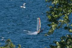 Windsurfers on the Kingston Waterfront (Rick 2025) Tags: windsurfers