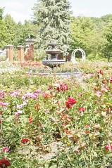 11222106_10153099684002076_560076138438227043_o (jmac33208) Tags: park new york roses rose garden central schenectady