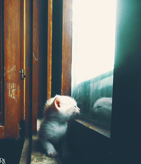 Cats Edition 7 - (39) (Robert Krstevski) Tags: pet cats baby pets cute animal animals cat photography photo kitten day gator gators kitty kittens gatos macedonia gato kitties gata cuteness robertkrstevski robertkrstevskiblogspotcom catsedition7