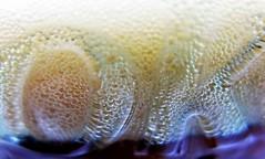 HMM! ~ bubble edition (karma (Karen)) Tags: macros glasses soda coke bubbles macromondays hmm