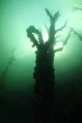 IMG_3791 (Andrey Narchuk) Tags: russia moscow freshwater green underwater weed tree