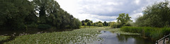 Abbey Park (lcfcian1) Tags: park panorama sun nature water abbey sunshine river landscape canal geese leicestershire pano leicester ducks panoramic swans waterside abbeypark leicestercitycentre