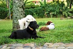 Conseguimos amiguitos (Dogs Resort Pereira) Tags: perros petit veterinaria manada peludos razasdeperros hotelparaperros perrosfelices fiestaparaperros dogsresort guarderaparaperros perrosenlapiscina tortaparaperros dogsresortpereira fotoscuriosasdeperros cumpleaosdeperros colegioparaperros guarderacampestreparaperros hotelcampestreparaperros colegiocampestreparaperros perrosjugandofu terapiaenlapiscina terapiaparaperrosenlapiscina reuninpadresdefamilia entregacalificacionesdenuestrospeludos calificacionesdelosperros tarjetaparaperros