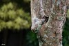 """""""Y""""  -  SEL1670Z :D (thincrust88) Tags: tree zeiss t bokeh sony e za f4 oss carlzeiss lanzones variotessar 1670mm sel1670z sonyvariotessarte1670mmf4zaoss sonya6000 sonyilce6000"""