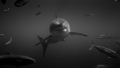Face to face - Face a face (Sharkoliv) Tags: underwater 2014 guadalupeisland nautilusexplorer