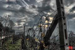 hdr apocalips (Gabriele Bosco) Tags: morning sun italia campagna autunno hdr vite mattina nubi apocalyps