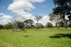 DF0034 (volkvanessa) Tags: parque braslia brasil natureza rvores distritofederal vegetao regiocentrooeste