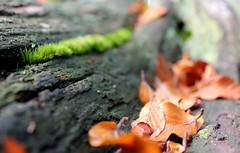 (Evelien Gerrits) Tags: canon mos leaf moss forrest blad leafs bos stam bole bladeren gerrits canon600d canoneos600d eveliengerrits